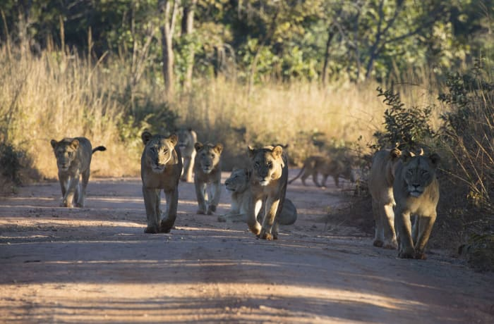 Excellent game walks in the Kafue National Park image