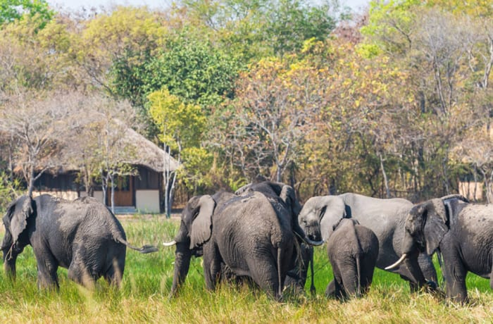 6 Nights Classic Kafue Safari