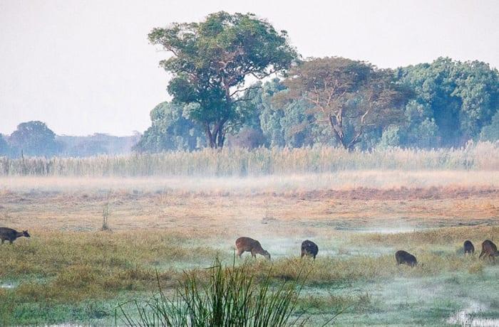 Kasanka Miombo & Riparian Woodland Birding Safari