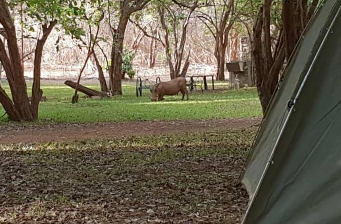 Monkey Camp Site