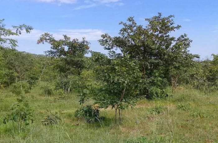 10 hectare vacant land for sale in Chisamba, Central