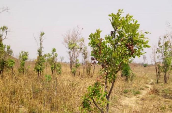1 hectare vacant land for sale in Ndola, Copperbelt