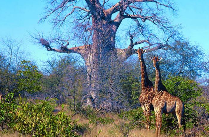 Meeting & Event Venue - Giraffe Room