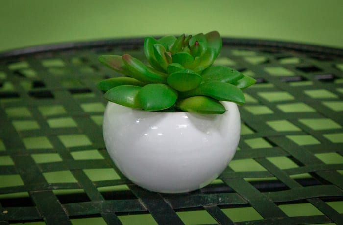 Sandy's Creations - Succulent in Pot