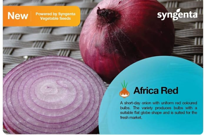 Introducing the newest Onion! Africa Red F1 image