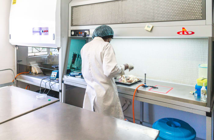 Animal diagnostic testing image