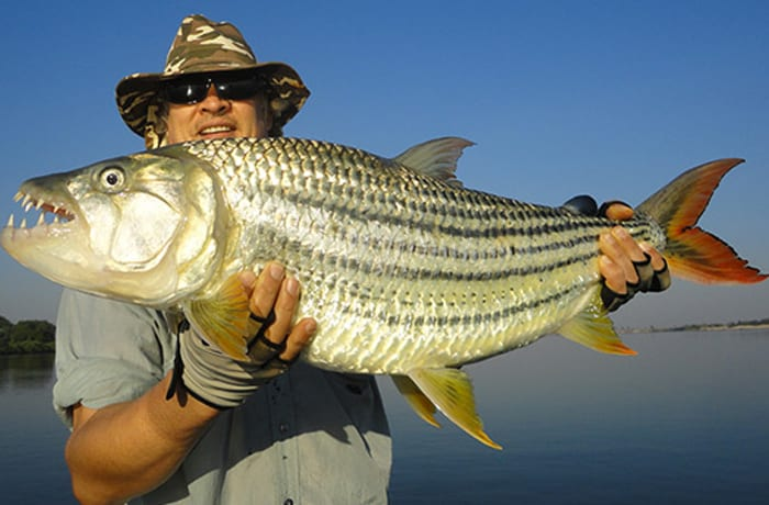 Catch the famous tiger fish, rated as the finest sporting and fighting fish in the world image