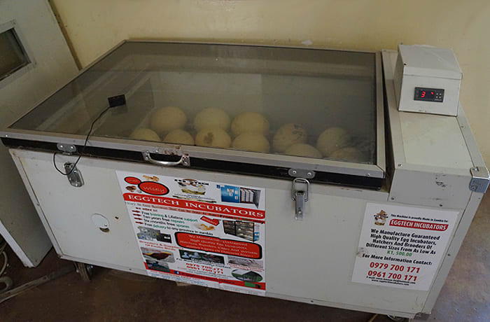 Poultry rearing equipment image