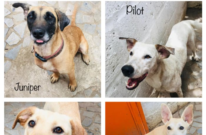 Dogs available for adoption image