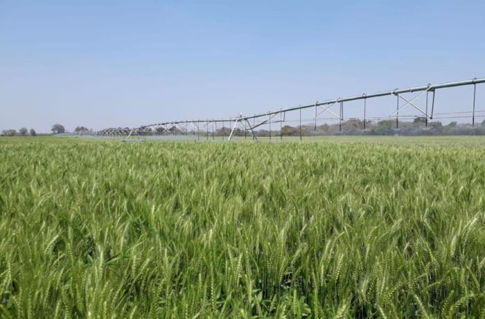 4000 Hectare Farm for Sale - Kitwe, Zambia