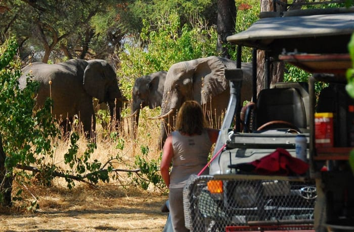 Chobe National Park day trip in Botswana (Excluding entry visa)