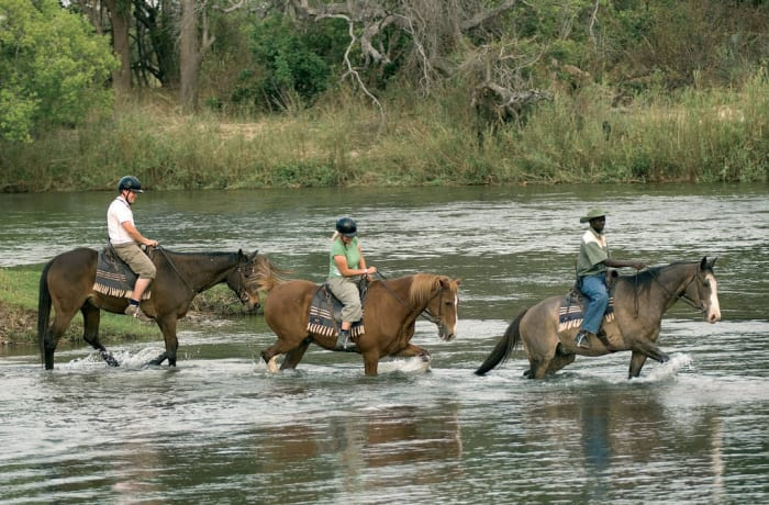 Animal tour - horse trail (half day trail with lunch)