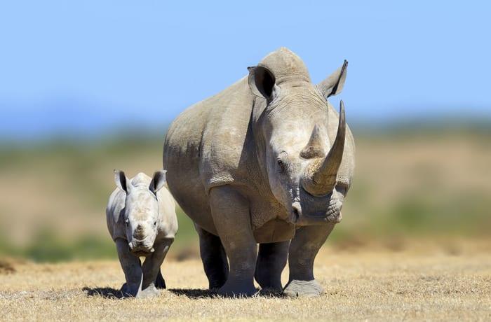 Rhino Walk (Three hours)