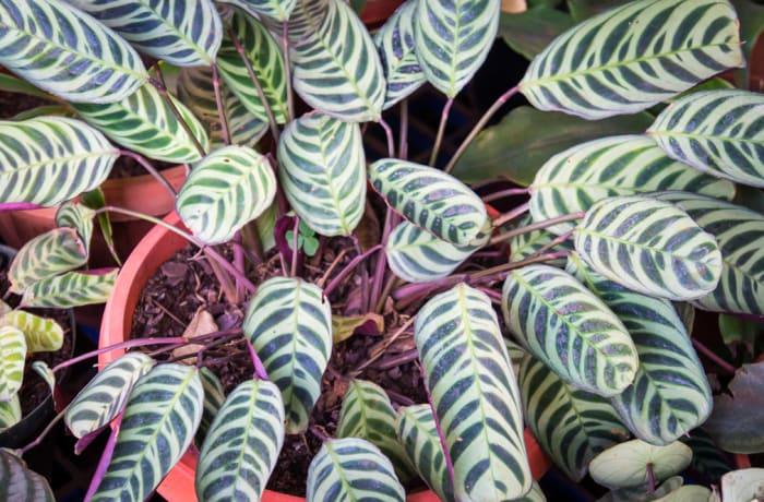 Plant 24 image
