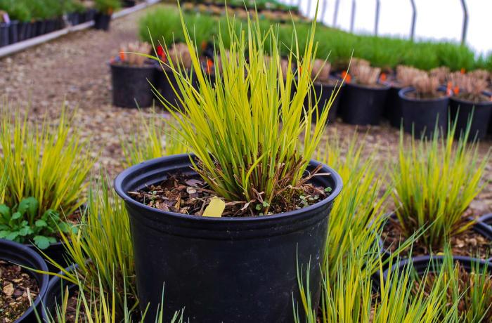 Grass plant  image
