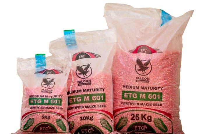 M 601 Medium Maturity Certified Maize Seed - 5kg  image