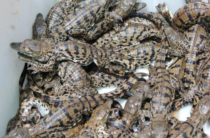 Kalimba Reptile Park image