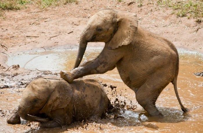 Baby Elephants image