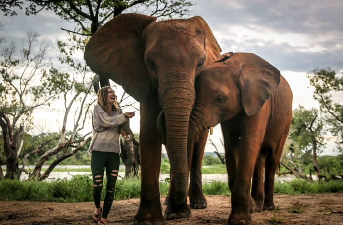 Livingstone Activities - Elephant Interaction, Speed / Jet boat, Elephant Café   image