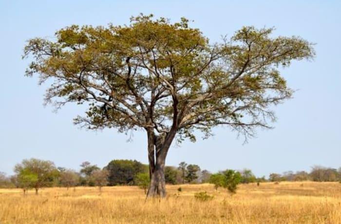 Chisamba Environmental Park - 1