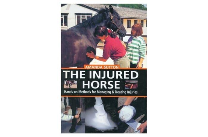 The Injured Horse image