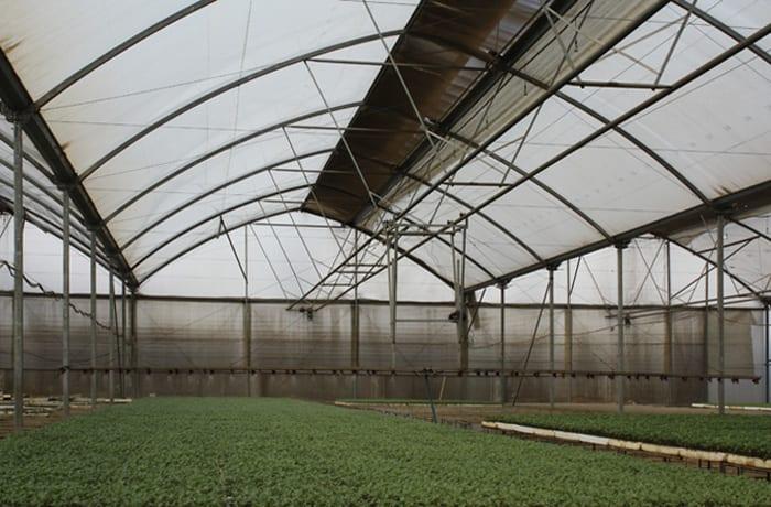 Seeds and seedlings - 1