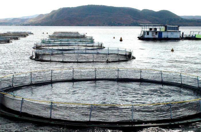 Fish farming - 3