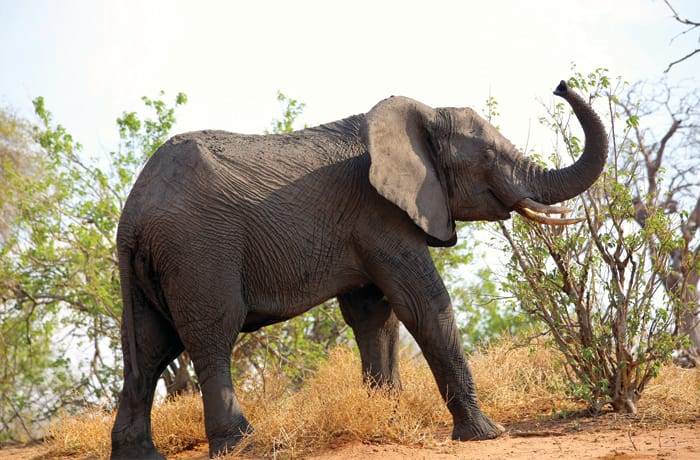 Animal encounter - 2