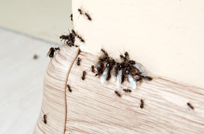 Pest control - 1