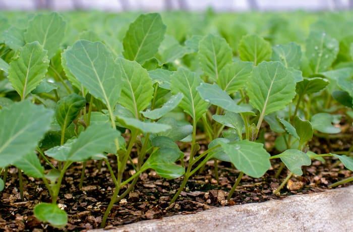 Seeds and seedlings - 0