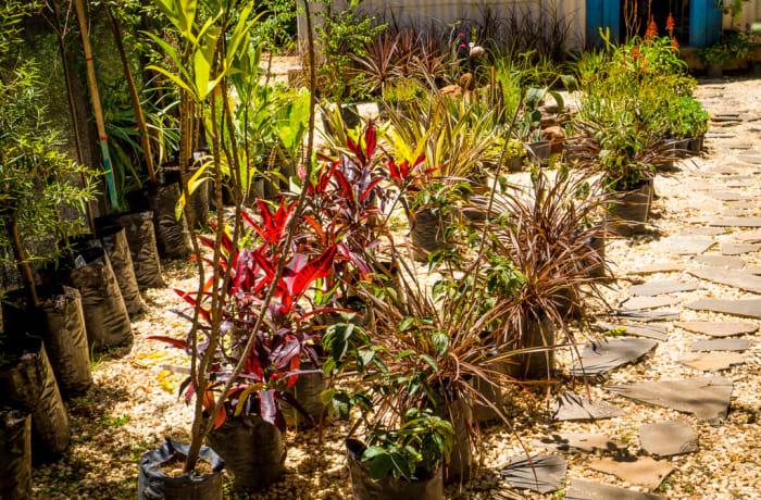 Tree and plant nurseries - 3