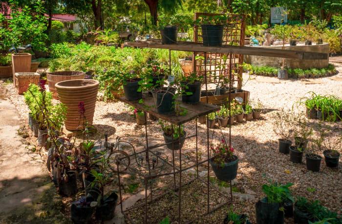 Tree and plant nurseries - 2