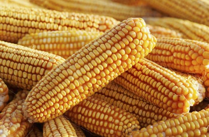 Commodity buyers - 3