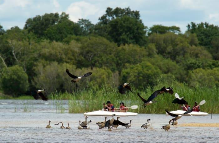 Zambezi canoe trips and water taxi - 1