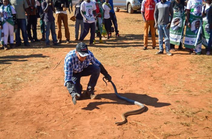 Promoting a positive attitude towards snakes - 3
