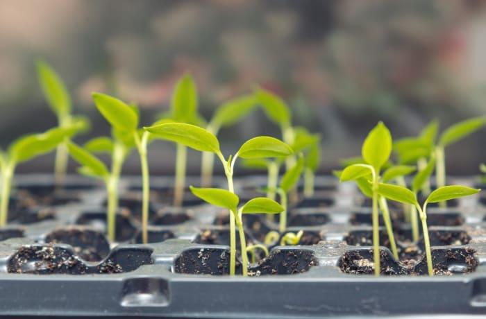 Seeds - 3