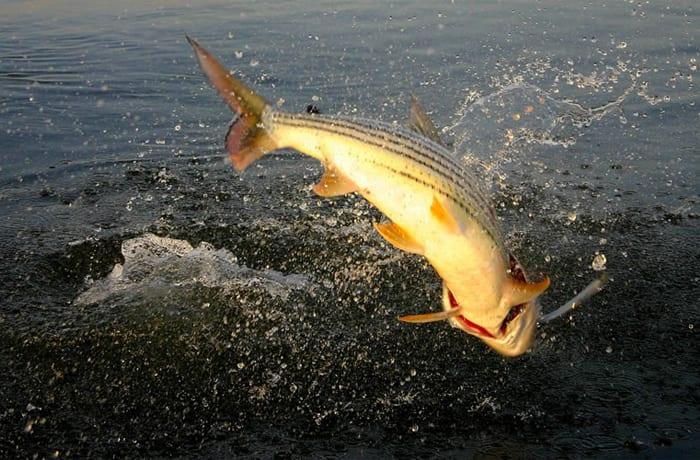 Fishing - 1