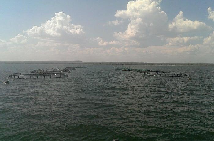 Aquaculture - 3