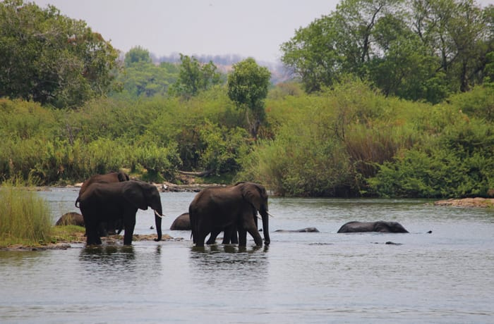 Safaris - 2