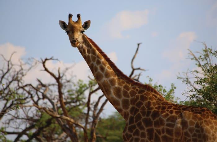 Safaris - 3