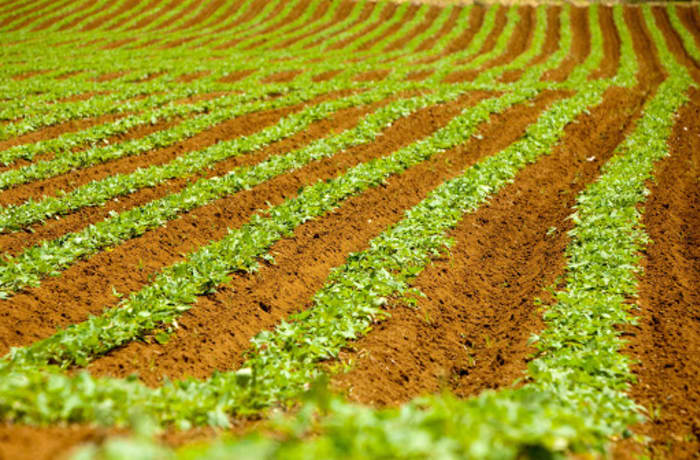 Agricultural land and property - 3