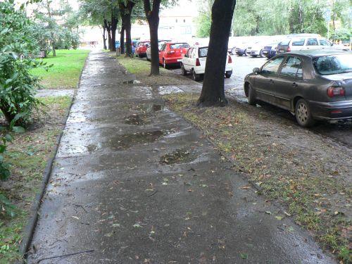 Ostrava, záchrana stromořadí, M&P Architekti, Mp architekti