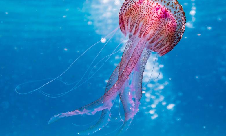 Under water sea walking