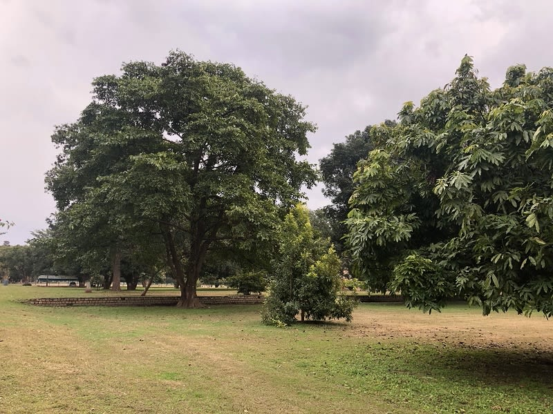 Solo travel - Dehradun - Forest research Institute