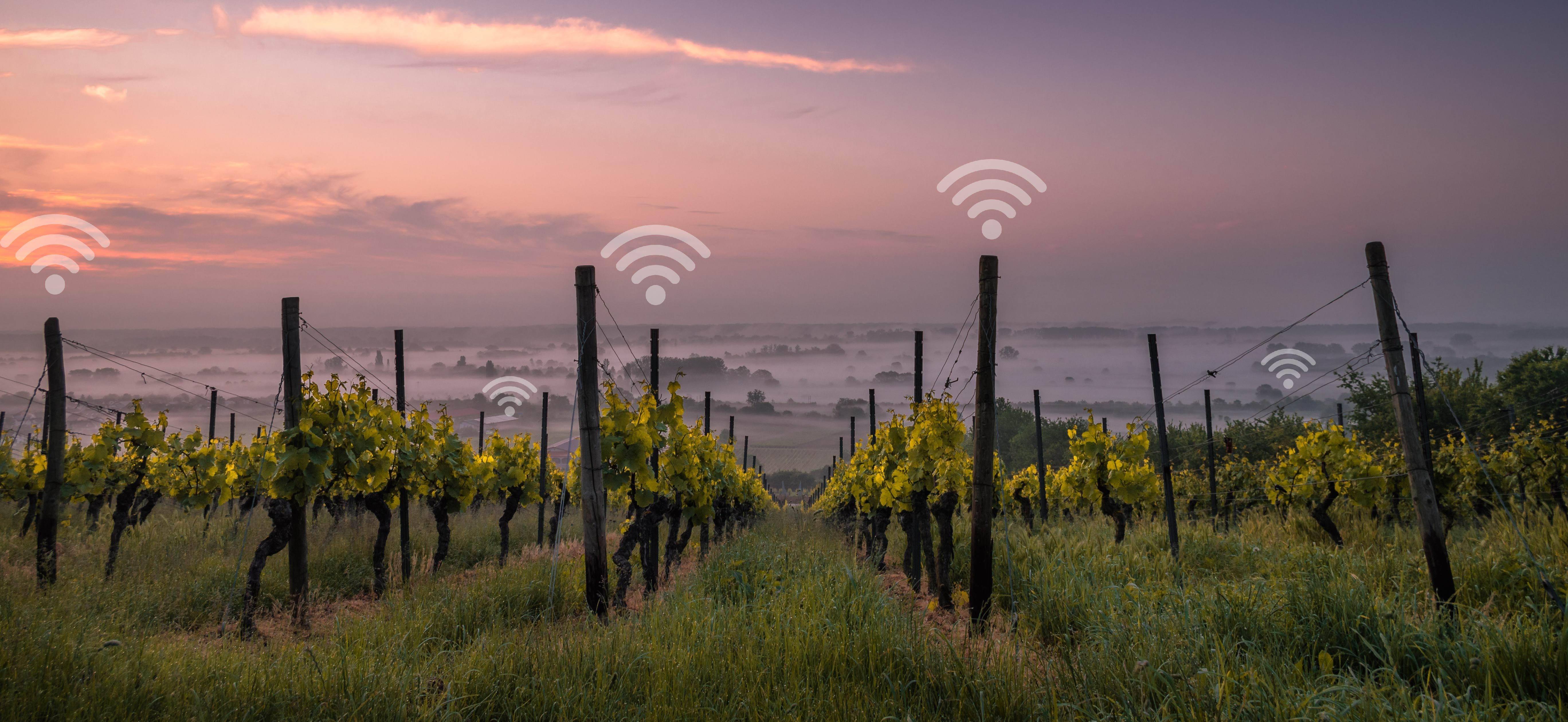 Internet of Wines Benefits