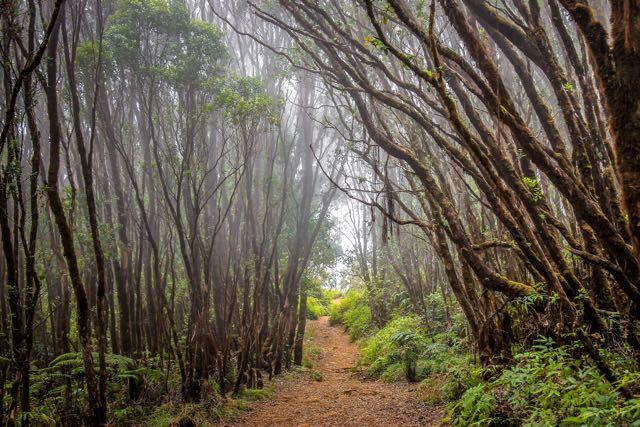 Pihea Trail Kauai