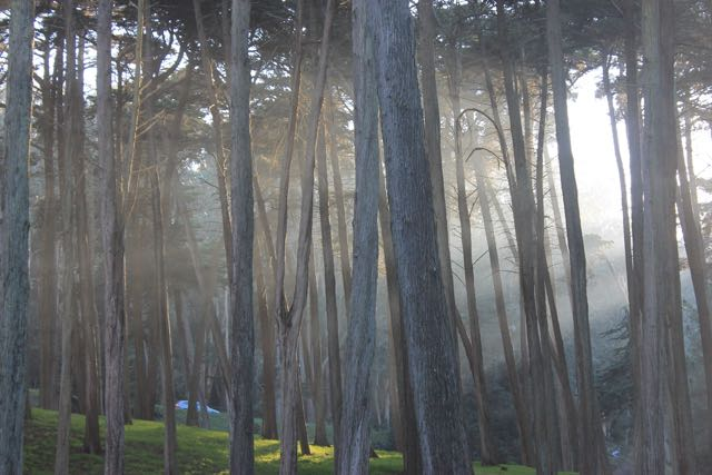 Presidio Forest SF7