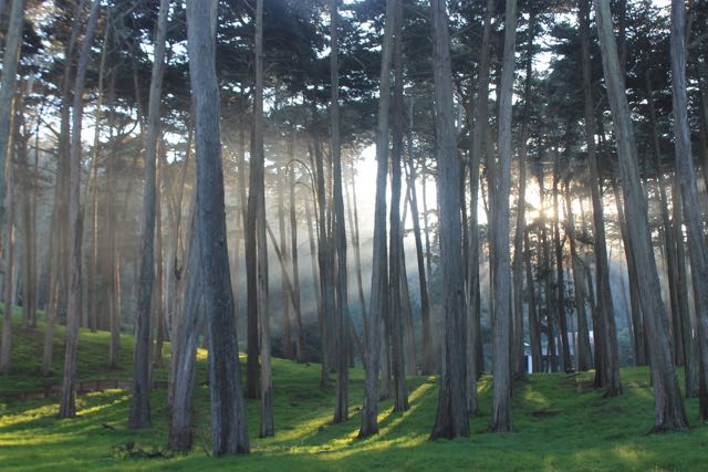 Presidio Forest SF6