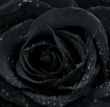 rosa-nera.jpg