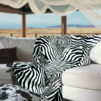 Zebra by carma